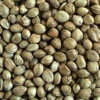 Hemp Seeds